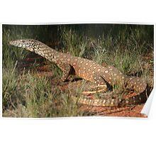 Varanus gigantus_Owen Springs_NT Poster