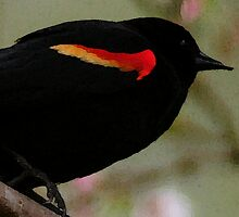 REDWING BLACKBIRD by RoseMarie747