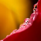 pink droplets in line by lensbaby