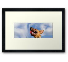 Dogs with game face on .16 Framed Print