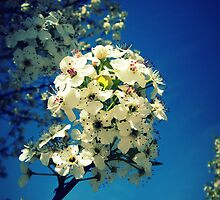 Spring Flowering Tree by Susan S. Kline