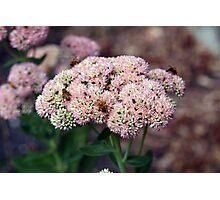 Honey Bee Heaven Photographic Print