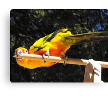 Yellow parrot Canvas Print