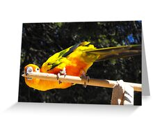 Yellow parrot Greeting Card