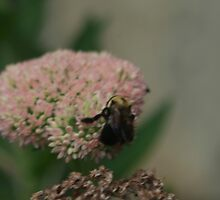Bumble Bee Bliss by christalscamera