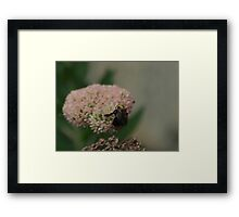 Bumble Bee Bliss Framed Print