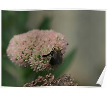Bumble Bee Bliss Poster