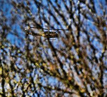Huey behind the trees by Guy Carpenter