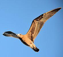 Albatross by Vicki73