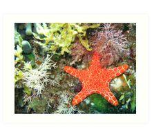 Under the Sea - Starfish Art Print