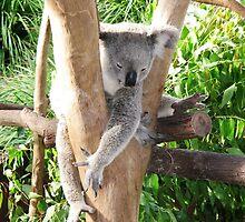 Sleeping Koala - Australia by Riette McDonald