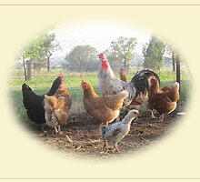 The Rooster and His Girls by Penny Alexander