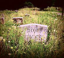 Tapped In Dixie  by Paul Lubaczewski