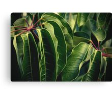 Just Green Canvas Print