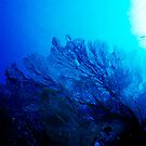 Sea Fan 3 by Dawn Eshelman