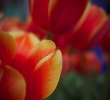 Tulips 3 by Gil Fewster