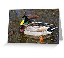 Male Mallard Duck ~ Drake Greeting Card
