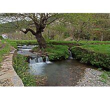 Water rushing by tree Photographic Print
