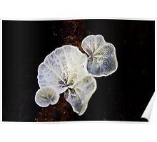 Fungi Season 1105 Poster