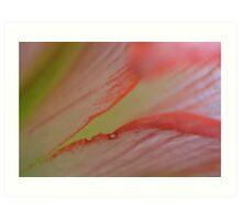 Pink splits Art Print
