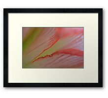 Pink splits Framed Print