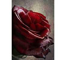 Blood Red Rose Photographic Print
