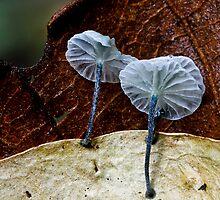 Fungi Season 1106 by Normf