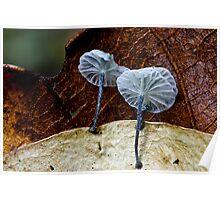 Fungi Season 1106 Poster
