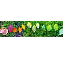 Coloured Leaf Line-Up Photographic Print