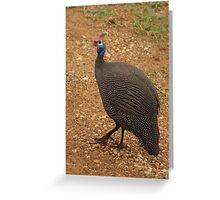 the guinea fowl Greeting Card