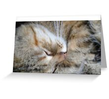 muzzle sleeping cat Greeting Card