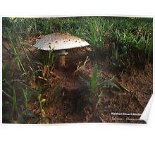 Kalahari Desert Shrooms Poster