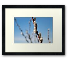 Freshness and Fuzziness of Spring Framed Print