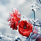 Iced roses by DanielVijoi