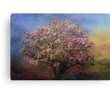 Magnolia Tree in Bloom Canvas Print