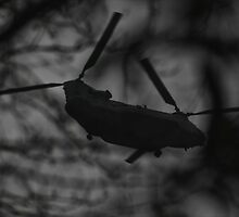 Grey Chinook through the trees by Guy Carpenter