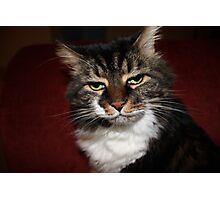 Kitty No Like Flashy Photographic Print