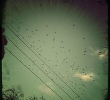 Flock Flyover by ampsims