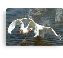 Swan Fight Canvas Print