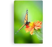 Butterfly 17 Canvas Print