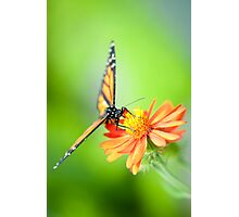 Butterfly 17 Photographic Print
