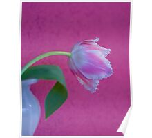 Tulip Lace Poster