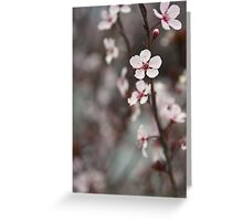 Blossoming at Collierville Square Greeting Card