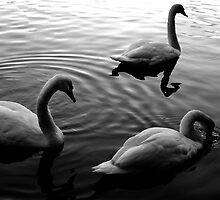 Swan Lake by Don Alexander Lumsden (Echo7)