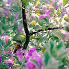 Bee in sagebush by ♥⊱ B. Randi Bailey