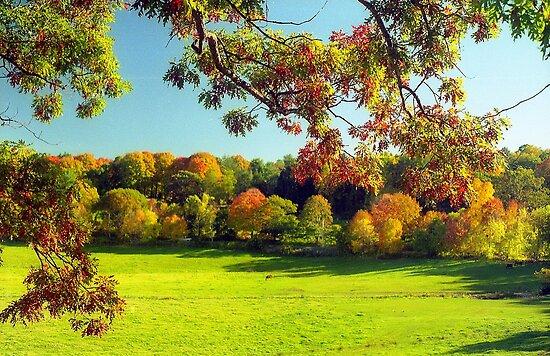 Autumn in Connecticut Meadow by Alberto  DeJesus