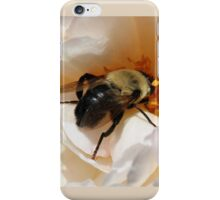 Close Up of a Bee iPhone Case/Skin