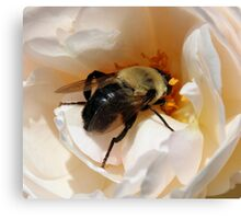Close Up of a Bee Canvas Print