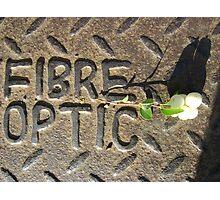 Fibre Optic (mistletoe on metal) Photographic Print