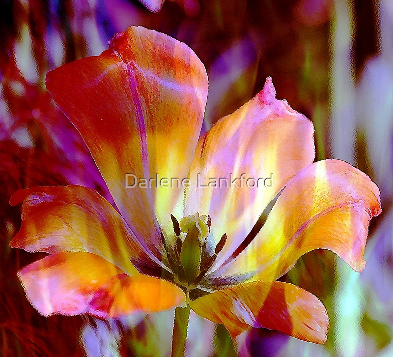 *Fiery Tulip* by Darlene Lankford Honeycutt